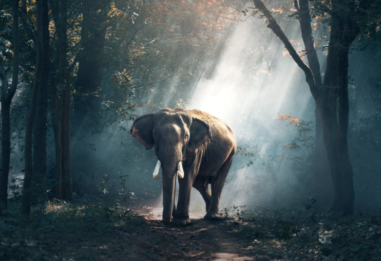 """A Post-Pandemic """"Elephant in the Room"""""""